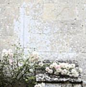 English Roses IIi Art Print