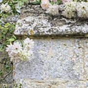 English Roses Vi Art Print