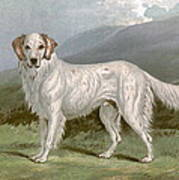 English Setter - Left Art Print