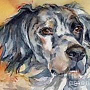 English Setter Portrait Art Print
