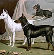 English Terriers Art Print