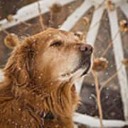 Enjoying The Moment - Golden Retriever - Casper Wyoming Art Print