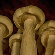 Enokitake Mushrooms  Art Print