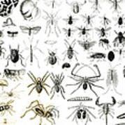 Entomology Myriapoda And Arachnida  Art Print