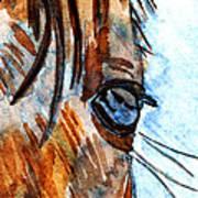 Equine Reflection Art Print