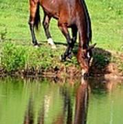 Equine Reflections Art Print