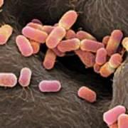 Escherichia Coli Bacteria Art Print