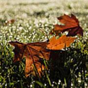 Essence Of Autumn Art Print