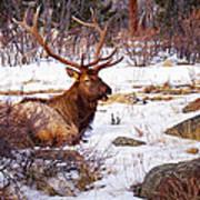 Estes Park Elk Art Print