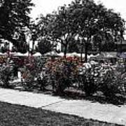 Esther Short Park Rose Garden Art Print