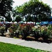 Esther Short Park Rose Gardens Art Print