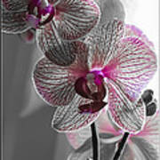 Ethereal Orchid Art Print