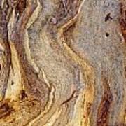 Eucalyptus Bark Art Print