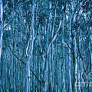 Eucalyptus Forest Art Print by Frank Tschakert