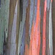 Eucalyptus Tree Bark Art Print