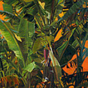 Eugene And Evans' Banana Tree Art Print