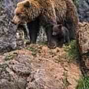 Eurasian Brown Bear 15 Art Print