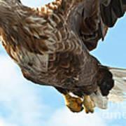 European Flying Sea Eagle 2 Art Print