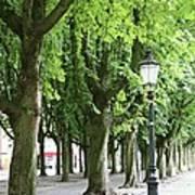 European Park Trees Art Print