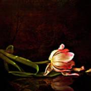Even Though A Flower Fades Art Print