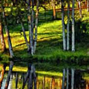 Evening Birches Painted Art Print