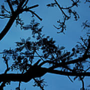 Evening Branches Art Print
