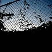 Evening Fence Art Print