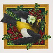 Evening Grosbeak Art Print