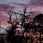 Evening Sky Color Art Print by Ella Char
