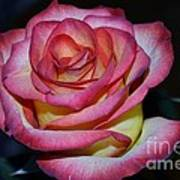 Event Rose Too Art Print