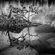 Everglades 0346 Art Print