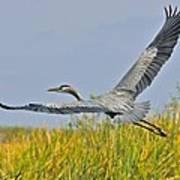 Everglades Flight Art Print