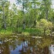 Everglades Lake Art Print