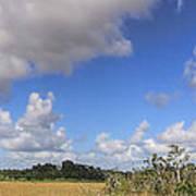 Everglades Landscape Panorama Art Print
