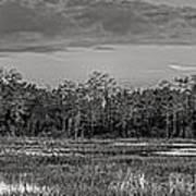 Everglades Panorama Bw Art Print