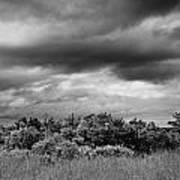 Everglades Storm Bw Art Print