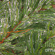 Evergreen Covered In Ice Art Print