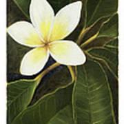Everywhere In Hawaii Art Print by Nancy Edwards