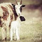 Ewe And Young Art Print