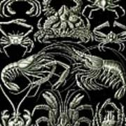 Examples Of Decapoda Kunstformen Der Natur Art Print