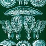 Examples Of Discomedusae Art Print