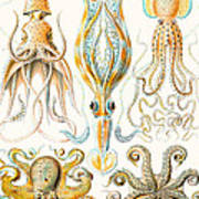 Examples Of Various Cephalopods Art Print