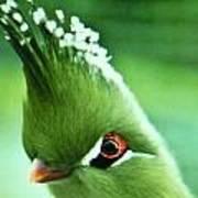 Exotic Birds Art Print