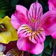 Exotic Flowers Art Print