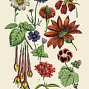 Exotic Flowers Of The Garden, Victorian Art Print