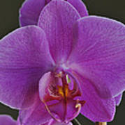 Exotic Orchid 2 Art Print