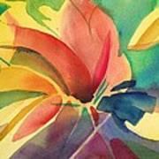 Exploding Lily Art Print
