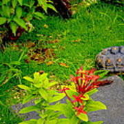 Exploration By A Red Footed Tortoise  Art Print