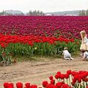 Exploring The Tulip Fields Art Print