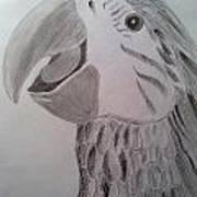 Expressive Parrot Art Print